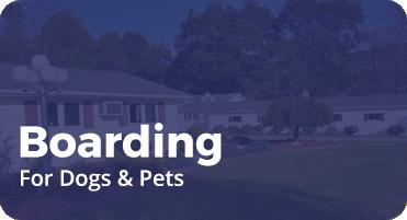 Dog Boarding Grooming In Duncansville Pa Mays Kennel